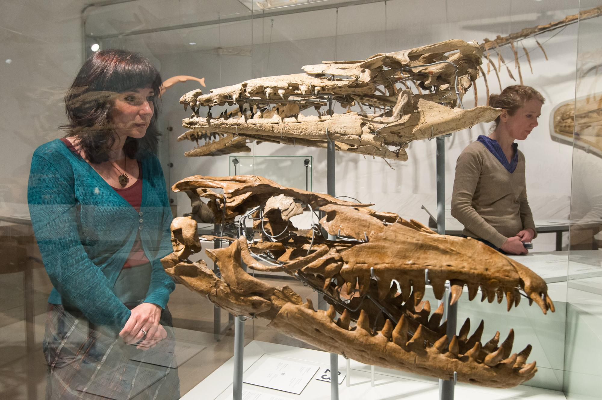 Kijken naar Inguanodons